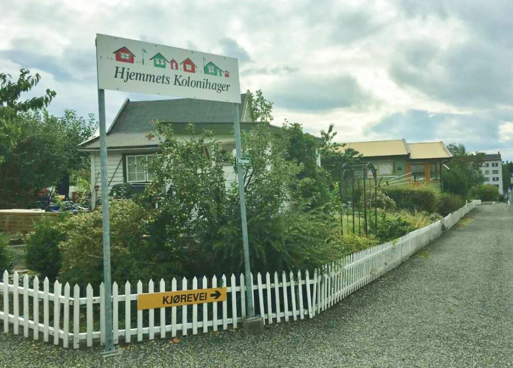 KOLONIHAGEPROBLEMER: Hjemmets kolonihager på Bjølsen i Oslo, hvor barne-TV-serien Portveien 2 ble spilt inn.