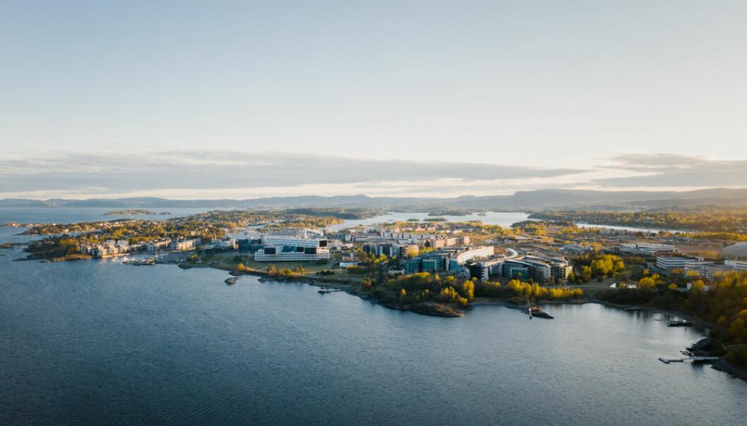 STORE PLANER: Selvaag AS har store planer på Fornebu. Fornebu Brygge får en beliggenhet helt ytterst mot sjøen.