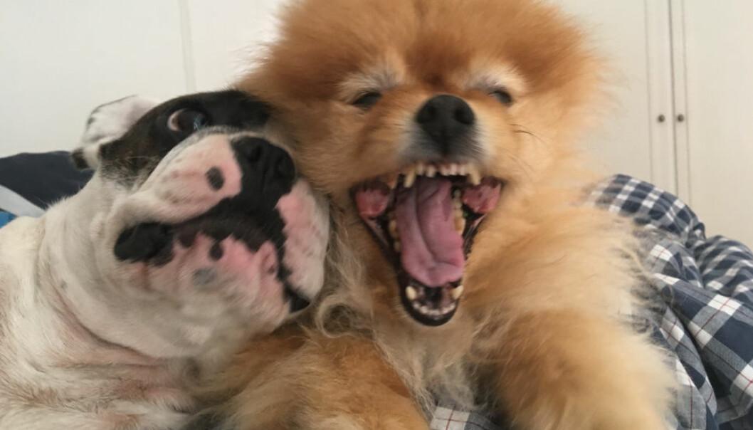 MANGEL: En boligselger må ut med erstatning på grunn av hundehold over flere år. (Ill. foto)