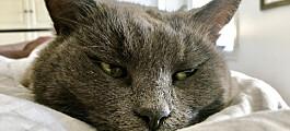 Utleier stevnet leietaker etter at katt hadde herpet bolig. Det gikk dårlig - for huseieren