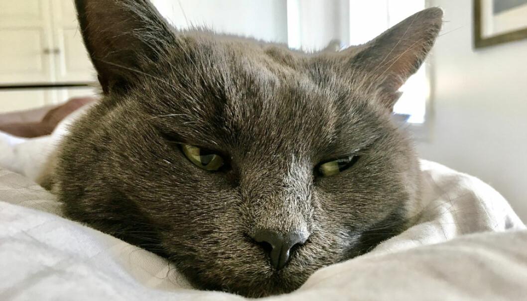 FIKK SEG EN SKRAPE: Utleieren stevnet leietakerne etter at boligen ble levert tilbake med kloreskader, formentlig forårsaket av katt. - Saksanlegget fremstår ikke rimelig overfor saksøkte, mener Asker og Bærum tingrett. (Ill. foto)