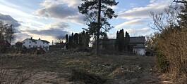 Gamle trær skaper trøbbel for eplehageutbygger