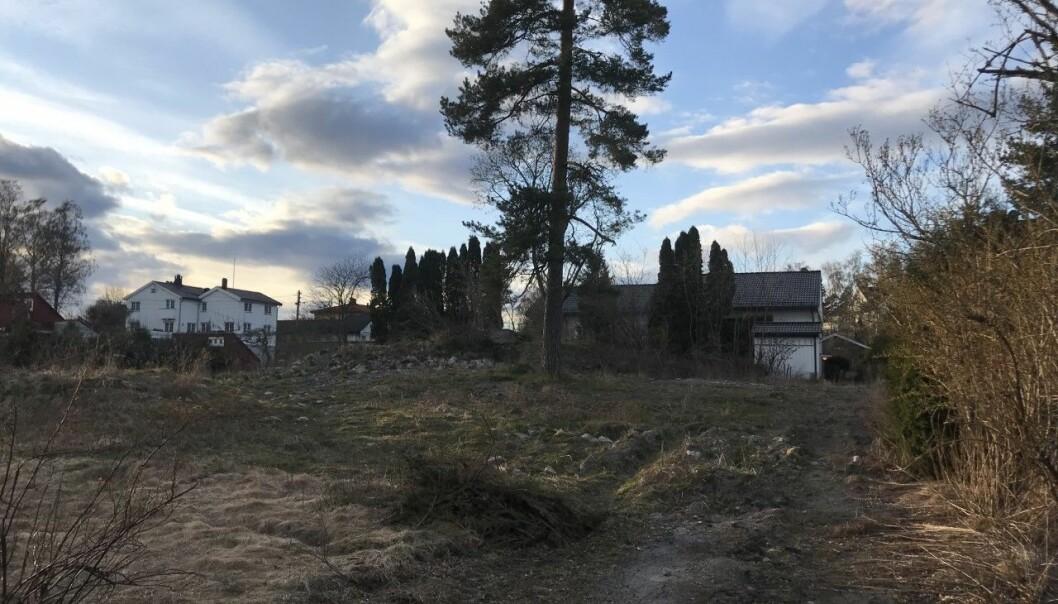 TRÆR TIL BESVÆR: Utbyggeren får ikke gjennomslag for å flytte treet midt på tomten.