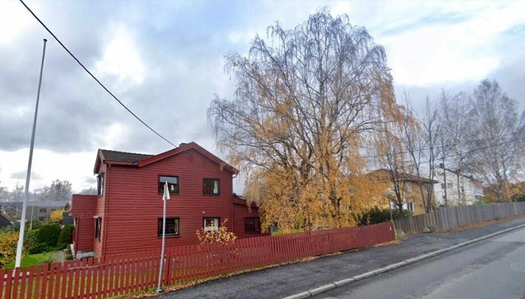 REDD FOR KONSEKVENSENE: Store grener fra de to trærne hadde falt ned, og huseieren var redd for at mennesker eller hus skulle bli skadet.