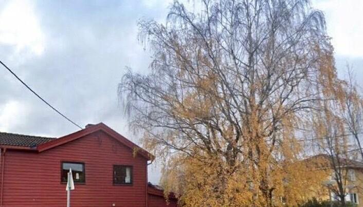 Huseieren ville felle farlige trær. Ble pålagt av PBE å plante nye